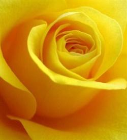 Жёлтый 10мл Краситель пищевой жидкий - фото 6061