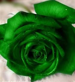 Зелёный 100мл Краситель пищевой жидкий - фото 6074