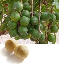 Макадамского ореха масло (рафинированное) 100мл - фото 6149