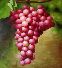 Виноградной косточки масло (рафинированное) 100мл - фото 6168