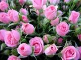Цветочная вода/ гидролат Розы 100мл