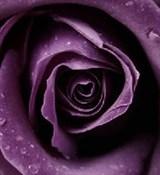 Чёрная смородина 10мл Краситель пищевой жидкий