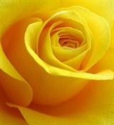 Жёлтый 100мл Краситель пищевой жидкий