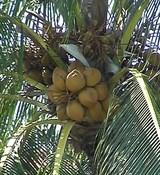 Пальмовое масло (рафинированное) 1кг