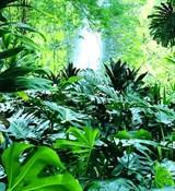 Тропическая свежесть отдушка косметическая 10мл