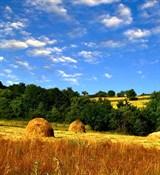 Скошенная трава отдушка косметическая 10мл