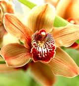 Орхидея отдушка косметическая 100мл