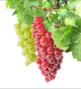 Виноград отдушка косметическая 10мл