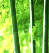Бамбуковое молочко отдушка косметическая 10мл