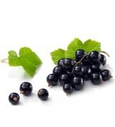 Чёрной смородины фруктовая пудра 5г
