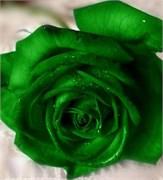 Зелёный Краситель для свечей (Жирорастворимый, сухой) 5г