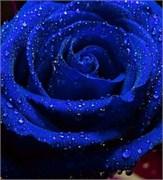 Синий Краситель для свечей (Жирорастворимый, сухой) 5г