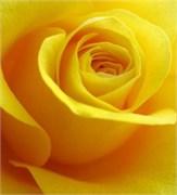 Жёлтый Краситель для свечей (Жирорастворимый, сухой) 5г
