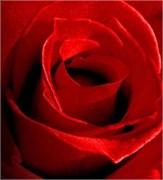 Красный Краситель для свечей (Жирорастворимый, сухой) 5г