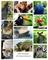 Водорастворимая бумага с рисунками №17 Зоопарк - фото 5062